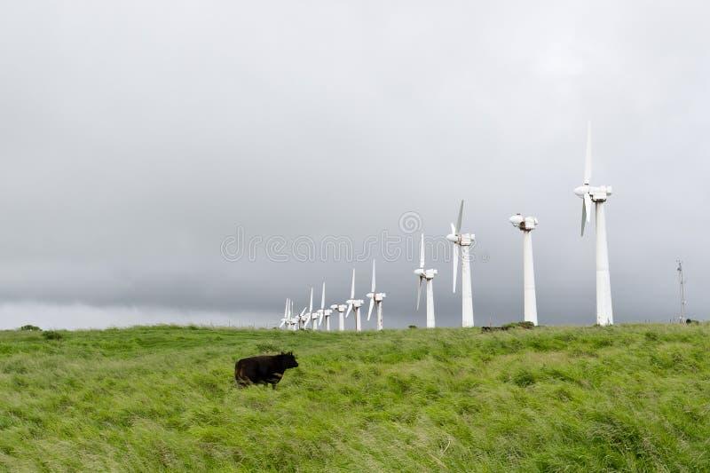 krowy zaniechana linia turbina stary wiatr zdjęcie stock