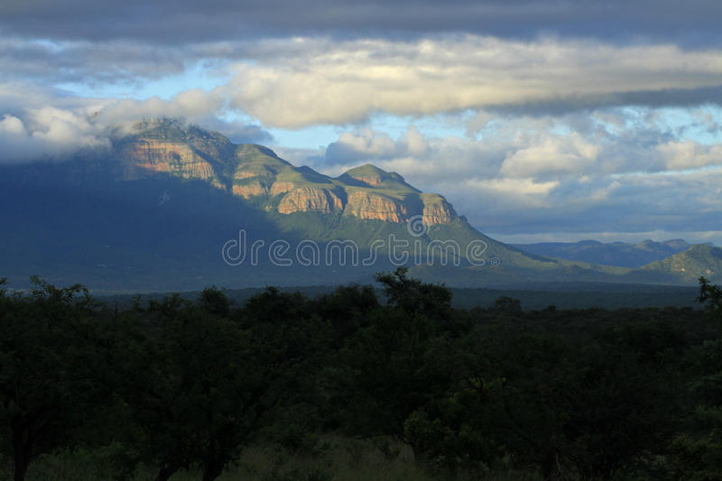 Kruger National Park. South Africa royalty free stock photos