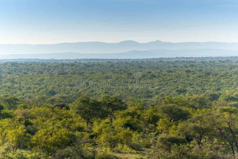 Kruger nationalpark, Mpumalanga, Sydafrika royaltyfri fotografi