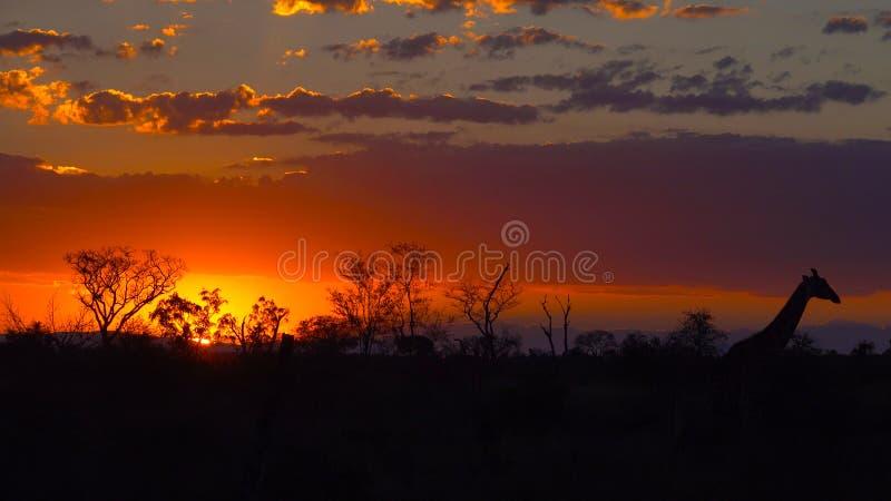 Kruger solnedgång royaltyfria bilder