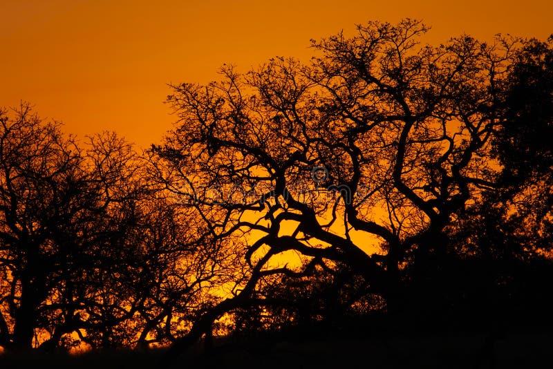 Kruger solnedgång royaltyfri fotografi