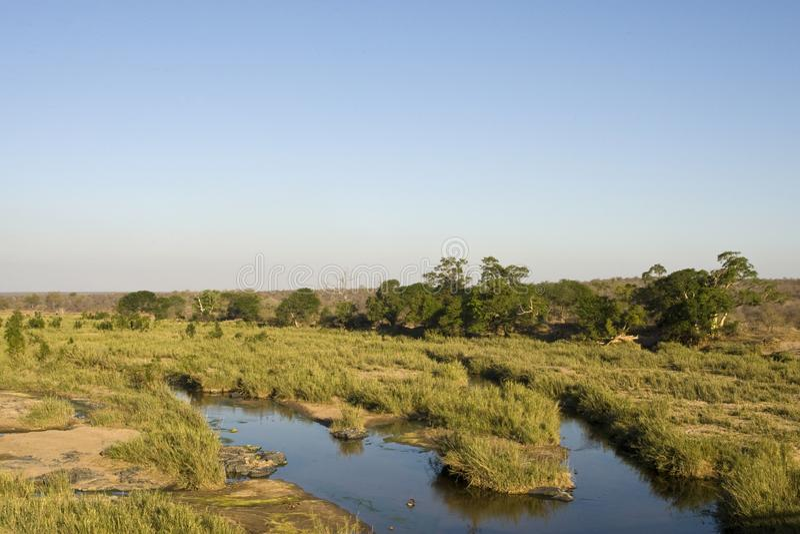 Krugerpark, South-Africa royalty free stock images