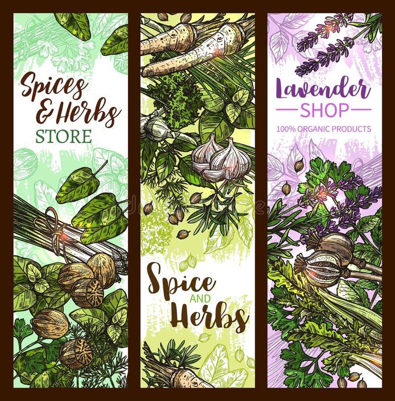 Kruid en kruidbanner met bladgroente en zaad stock illustratie