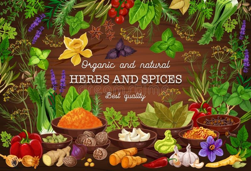 Kruiden, culinaire kruiden, het koken kruidenkruiden vector illustratie