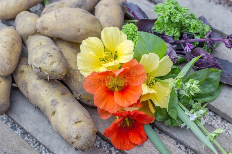 Kruiden en aardappels royalty-vrije stock afbeelding