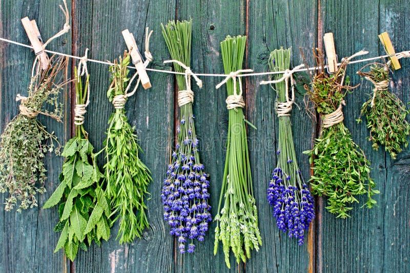 Kruiden en bloemen die uit hangen te drogen royalty-vrije stock afbeelding