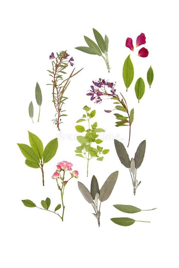 Kruiden en Bloemen van de Zomer royalty-vrije stock foto