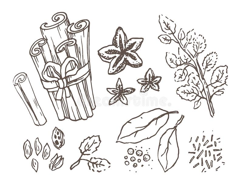 Kruiden en kruiden Hand getrokken vectorillustratiereeks Gegraveerd stijlaroma en specerijtekening Botanische wijnoogst royalty-vrije illustratie