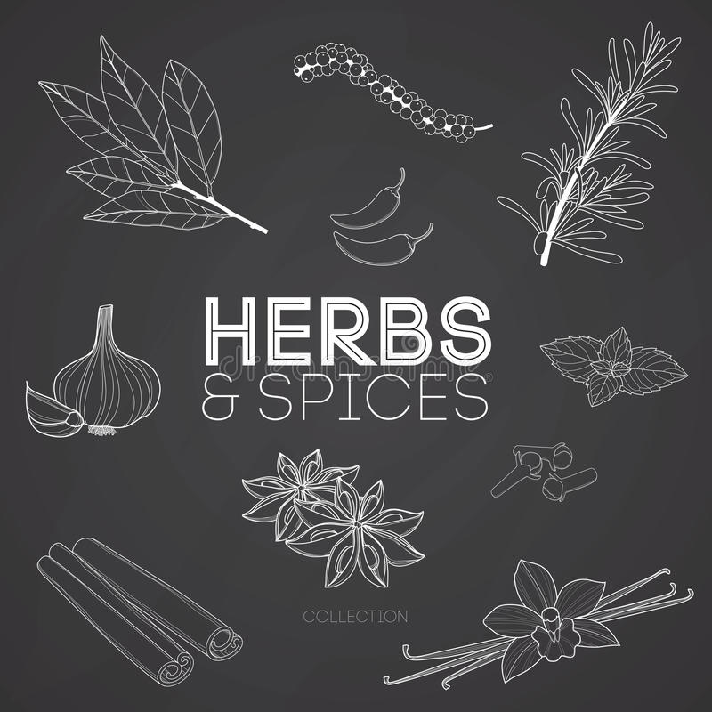 Kruiden en kruiden op bord vector illustratie
