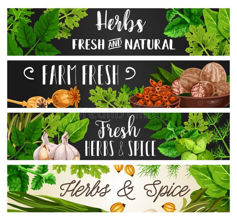Kruiden en kruiden, natuurlijk het koken kruiden royalty-vrije illustratie
