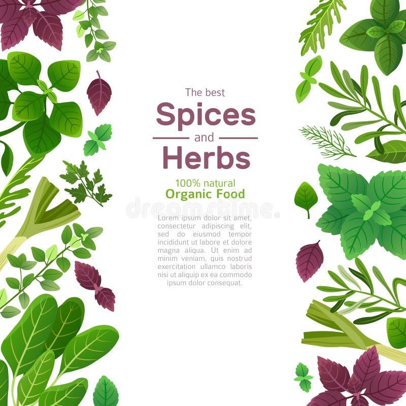 Kruiden en kruiden Van de de spinaziekoriander van de basilicummunt de peterseliedille en thyme Indisch kruid die Aziatische voed royalty-vrije illustratie