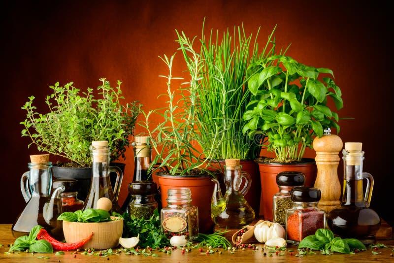 Kruiden, kruiden en olijfolie royalty-vrije stock afbeelding