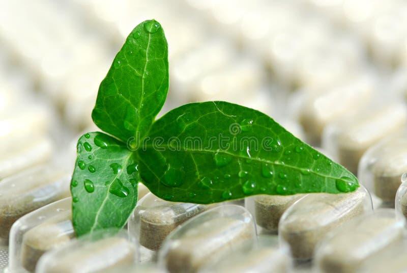 Kruiden supplement stock afbeelding