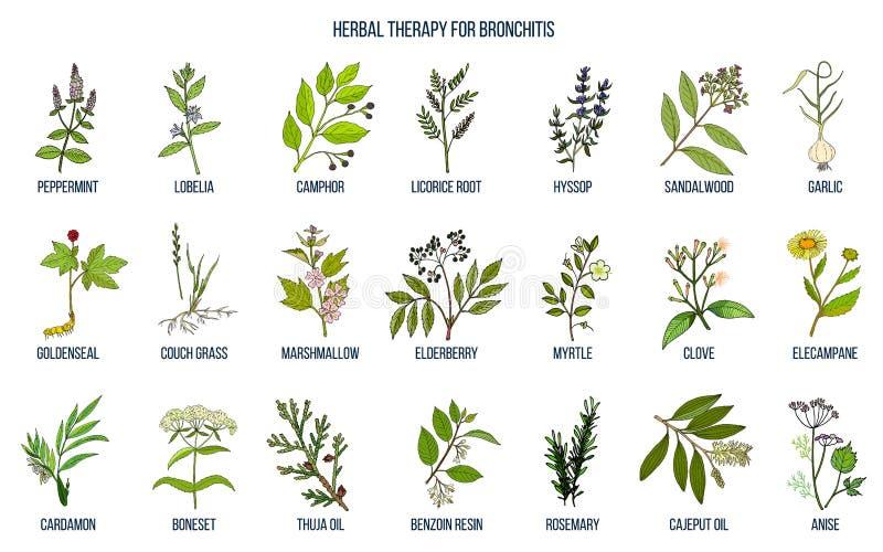 Kruidentherapie voor bronchitis vector illustratie