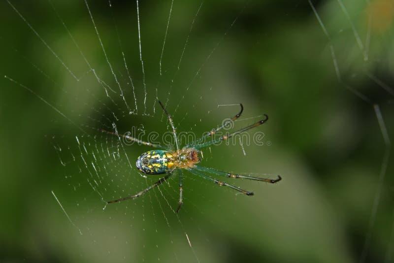 Kruisspin op Web met vage groene achtergrond royalty-vrije stock afbeelding