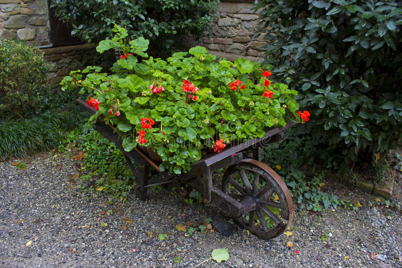 Kruiwagen van Rozen royalty-vrije stock foto's