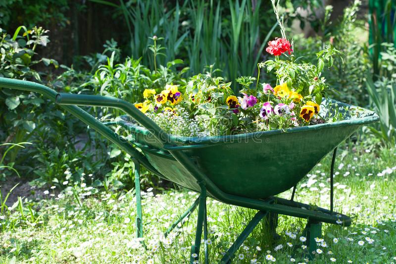 Kruiwagenhoogtepunt van kleurrijke bloemen in de tuin stock fotografie