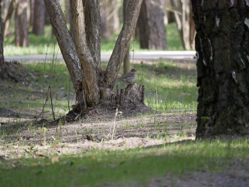 Kruk je ryby ?api?cej w stawie miasto park Na pogodnym letnim dniu Popielaci wron polowania Brzeg staw w cit fotografia royalty free