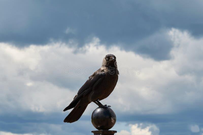 Kruk w górę na filarze przeciw niebu, zdjęcia royalty free