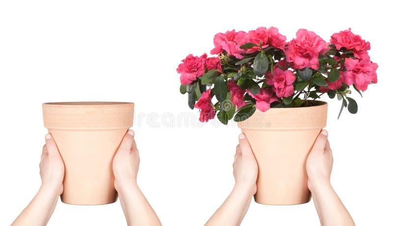 kruka för blommahandkeep royaltyfri fotografi