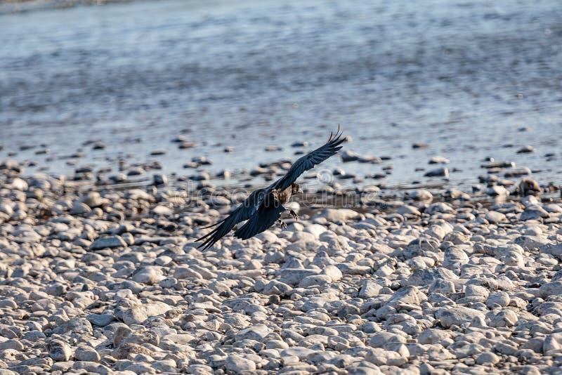 Kruka lądowanie na skalistym brzeg zdjęcia royalty free