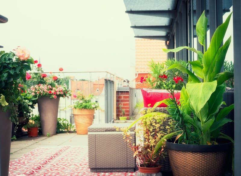 Krukor för Canna uteplatsblommor på balkong eller terrass med rottingmöblemang strömförande stads- royaltyfri foto