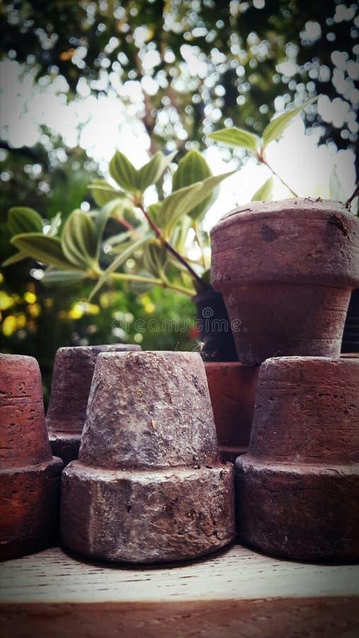 Krukor i trädgården arkivbilder