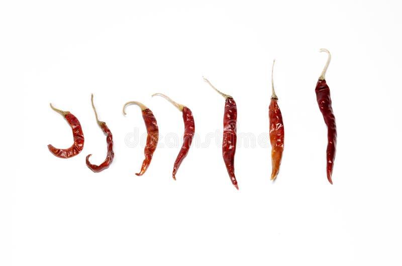 Krullende Spaanse peper en rechte Spaanse peper royalty-vrije stock foto