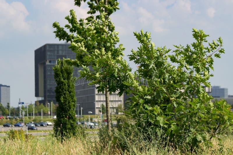 Krupp högkvarter med träd som är främsta av det arkivbilder