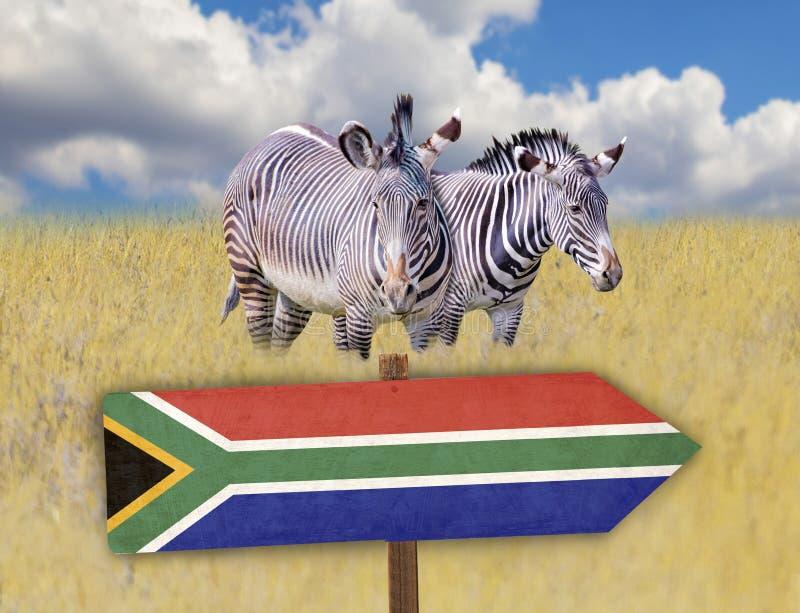 KRUSflagga på trätabelltecken på tropisk bakgrund En grupp av sebror står i gräset på savannahen i Afrika Bak dem arkivfoto