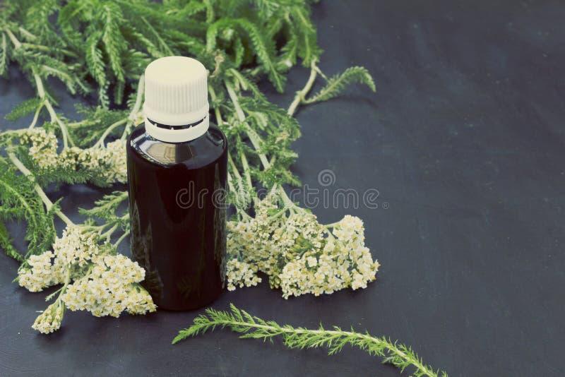 Krwawnika Achillea millefolium zdjęcia stock