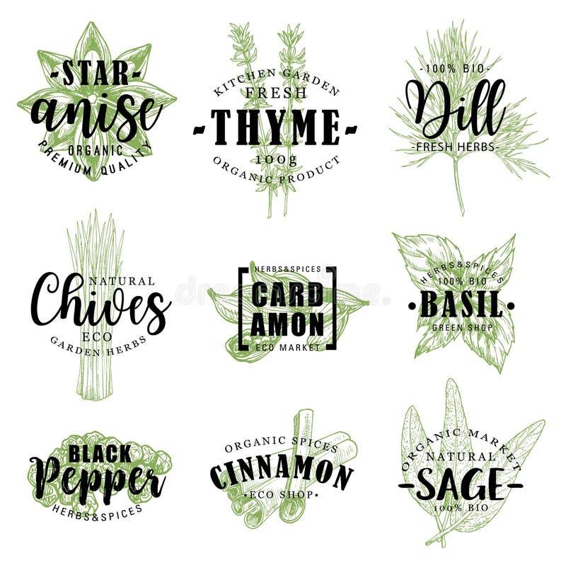 Krydda- eller örtbokstäver med matsmaktillsatsen skissar royaltyfri illustrationer