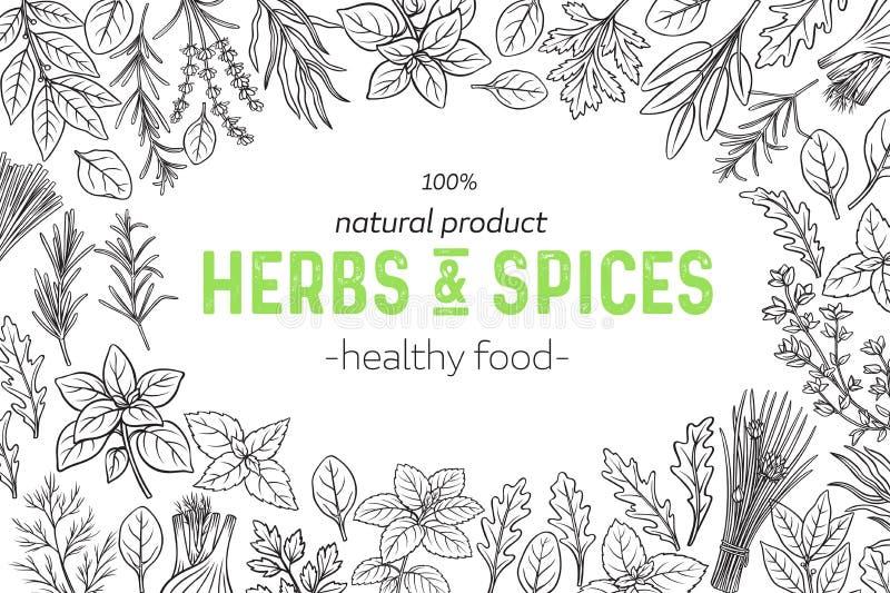 krydda för ingrediens för örtar för basilikamat växande stock illustrationer