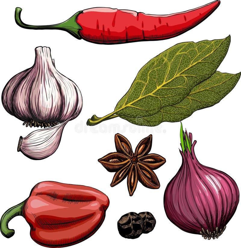 krydda för peppar för lök för leaf för fjärdvitlök varm royaltyfri illustrationer