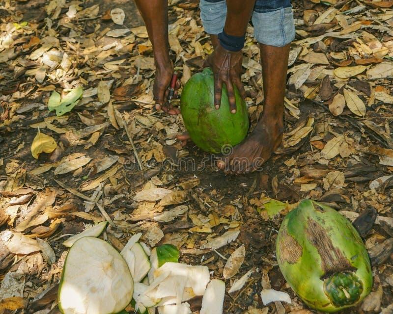 Kryddan turnerar, Zanzibar royaltyfria foton