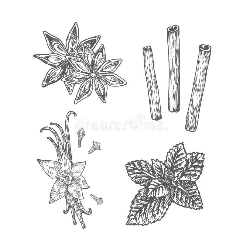 kryddar illustrationen Anis vanilj med kryddnejlika-, mintkaramell- och kanelabstrakt begrepp skissar Hand tecknad vektorillustra stock illustrationer