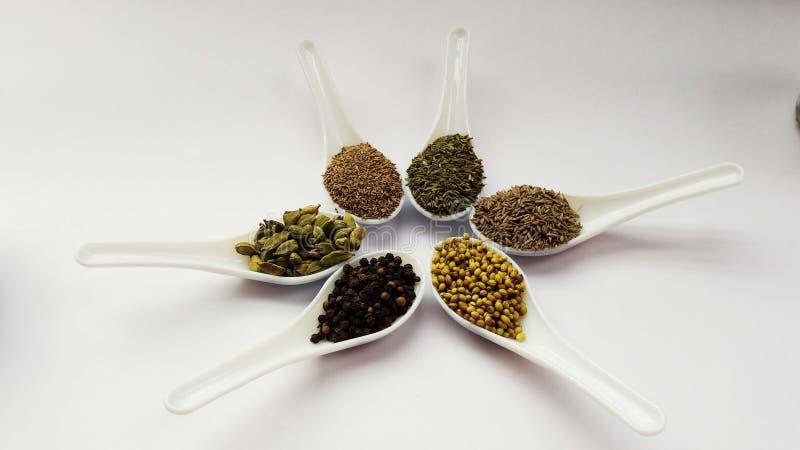 kryddar spiskummin, caromen, fänkål, koriander, svart papper, kardemumma i skedar som isoleras på vit bakgrund arkivfoton