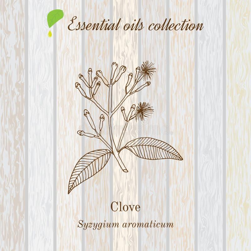 Kryddnejlika etikett för nödvändig olja, aromatisk växt också vektor för coreldrawillustration vektor illustrationer