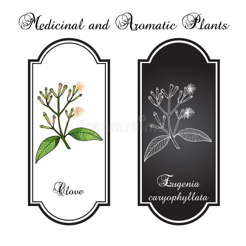 Kryddnejlika naturlig krydda vektor illustrationer