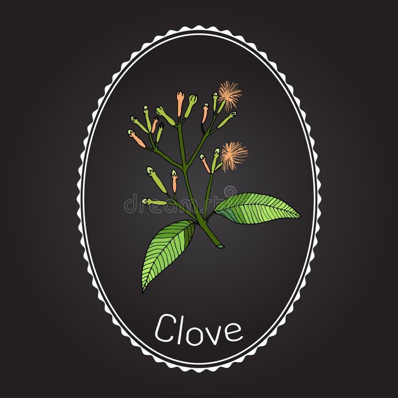Kryddnejlika naturlig krydda royaltyfri illustrationer