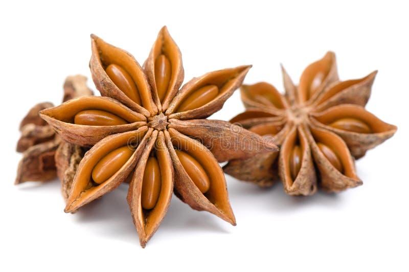 Kryddor anise som isoleras på white royaltyfria foton