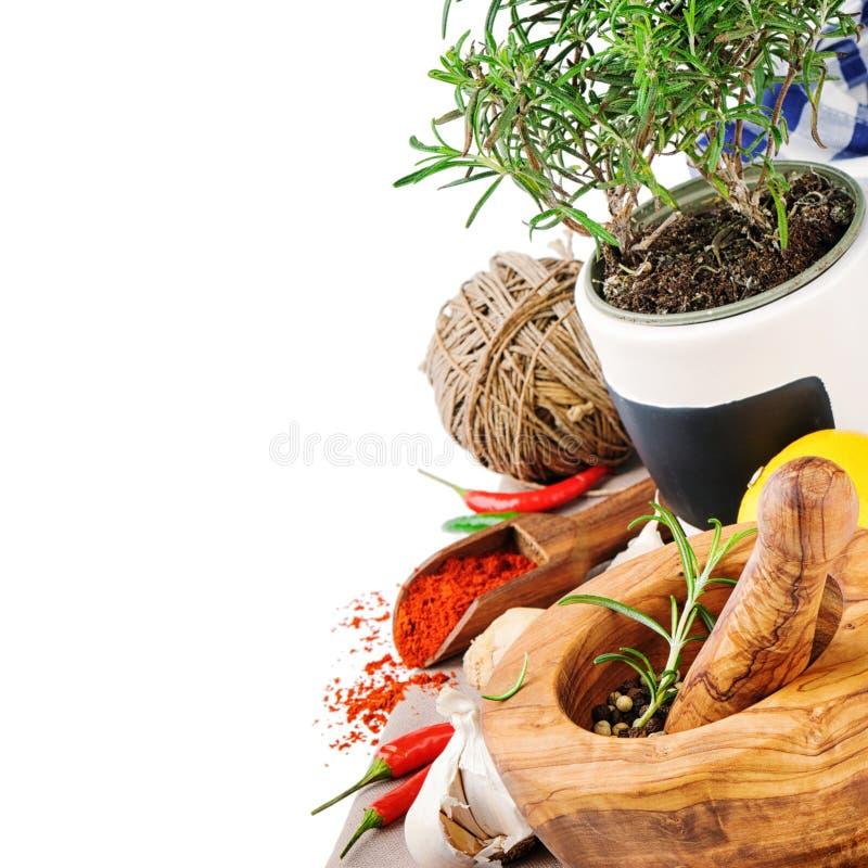 Kryddor och örtar arkivfoton