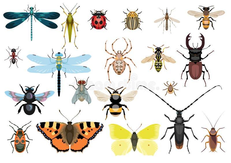 Kryp fel, fjärilssamling, illustration, teckning, vektor royaltyfri illustrationer
