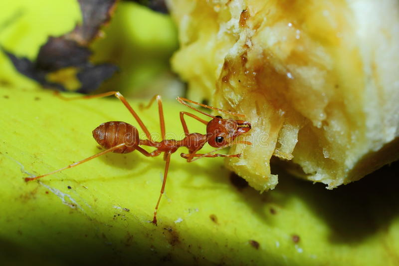 Kryp myror arkivbilder