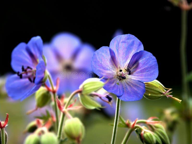 kryp nad för 6 blomma arkivfoton