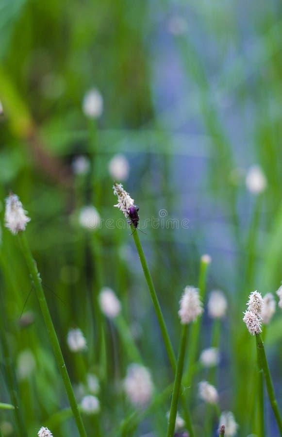 Kryp på gräset arkivfoto