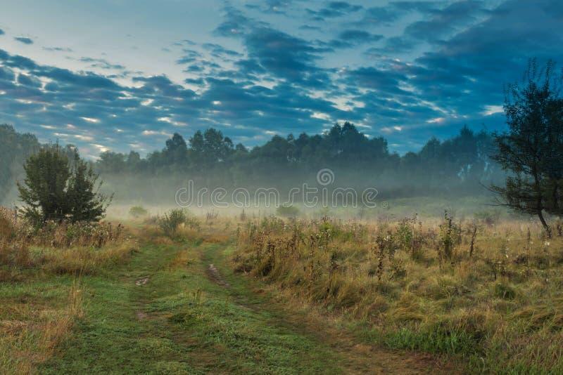 Krypa dimma, ogenomskinlighet längs vägen i fältet bredvid bakgrunden för skogabstrakt begreppnatur relax arkivbild