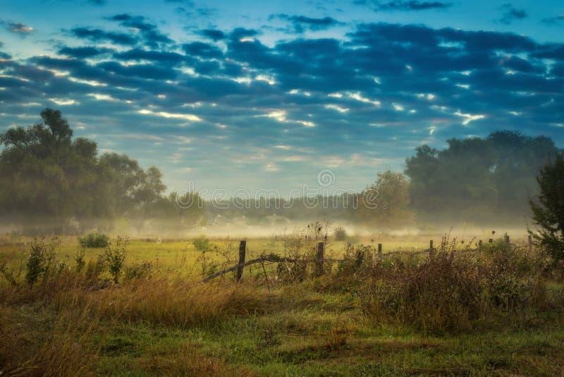 Krypa dimma, ogenomskinlighet på fältet bredvid bakgrunden för skogabstrakt begreppnatur relax Afton f?r stad royaltyfria foton