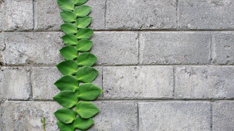krypa växt för tegelstenbetong royaltyfri foto