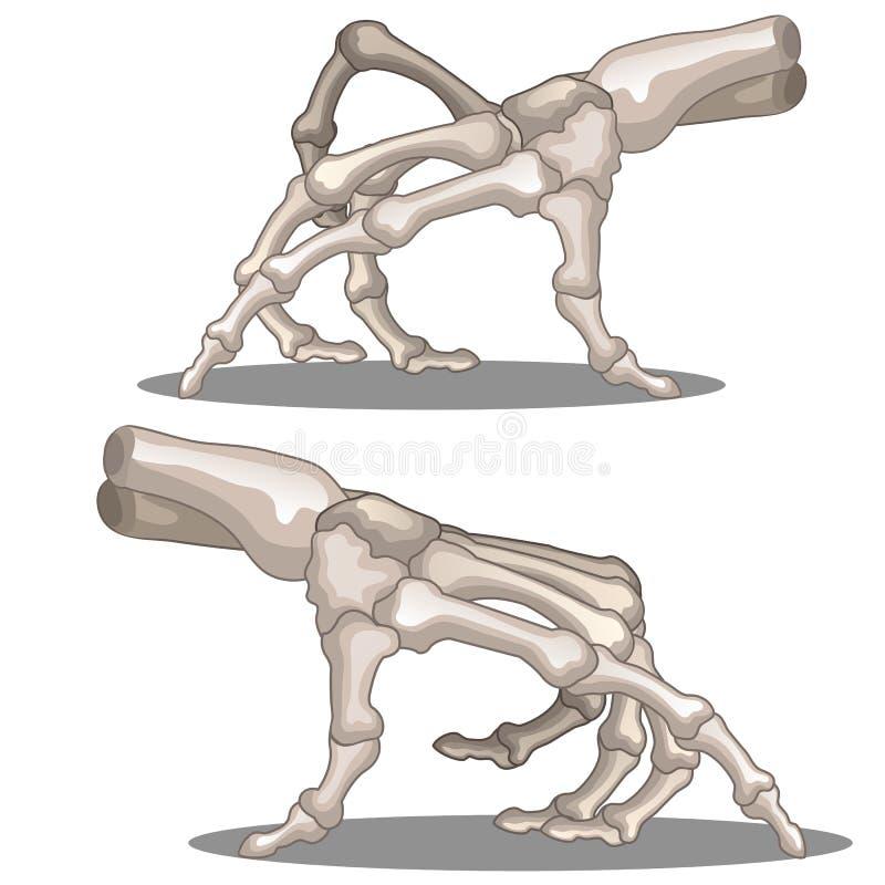 Krypande mänskligt handskelett stock illustrationer